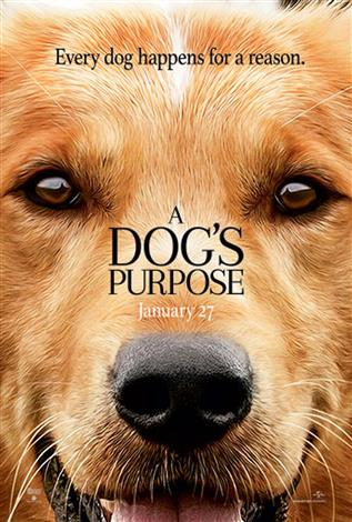 A Dog's Purpose - A Family Favourites Presentation