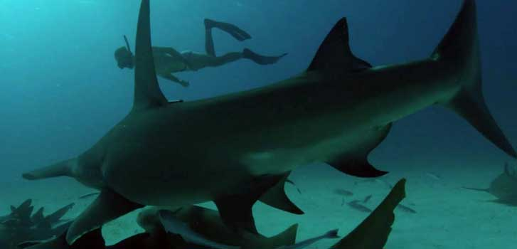 Watch the emotional first trailer for Rob Stewart's Sharkwater: Extinction